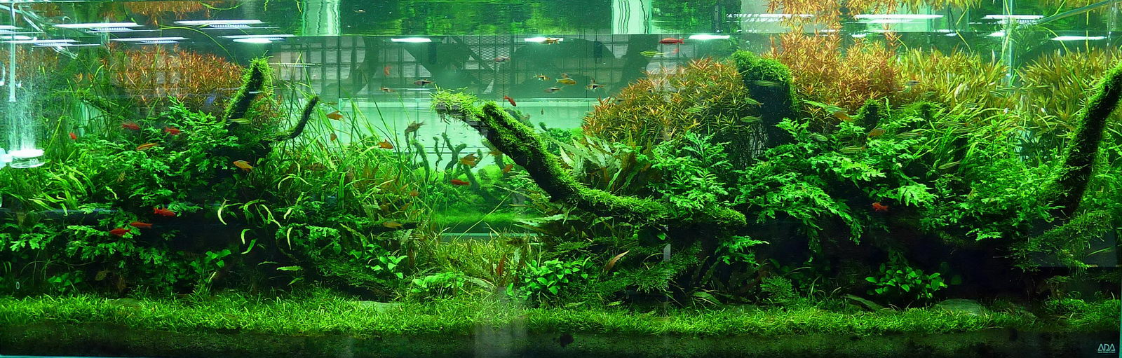 Ideas for 180 gallon aquascape? - The Planted Tank Forum