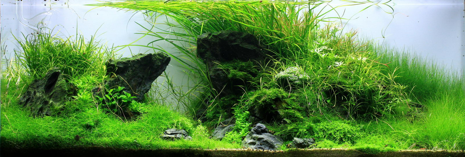 Image gallery aquascape background - Gallery aquascape ...