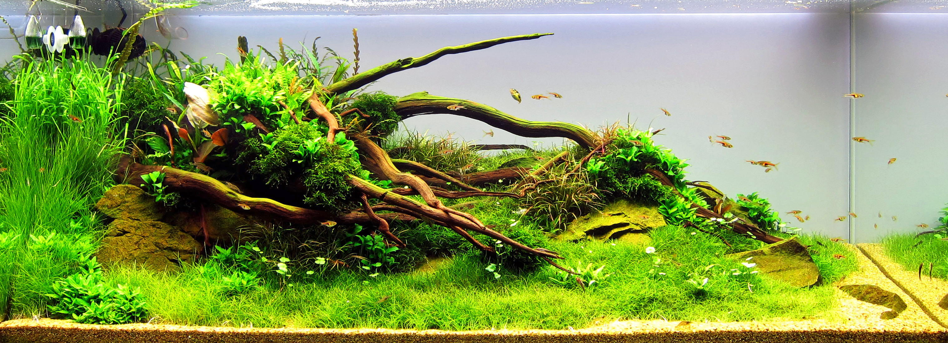 Nutrients for a planted tank aqua rebell for Plante aquarium