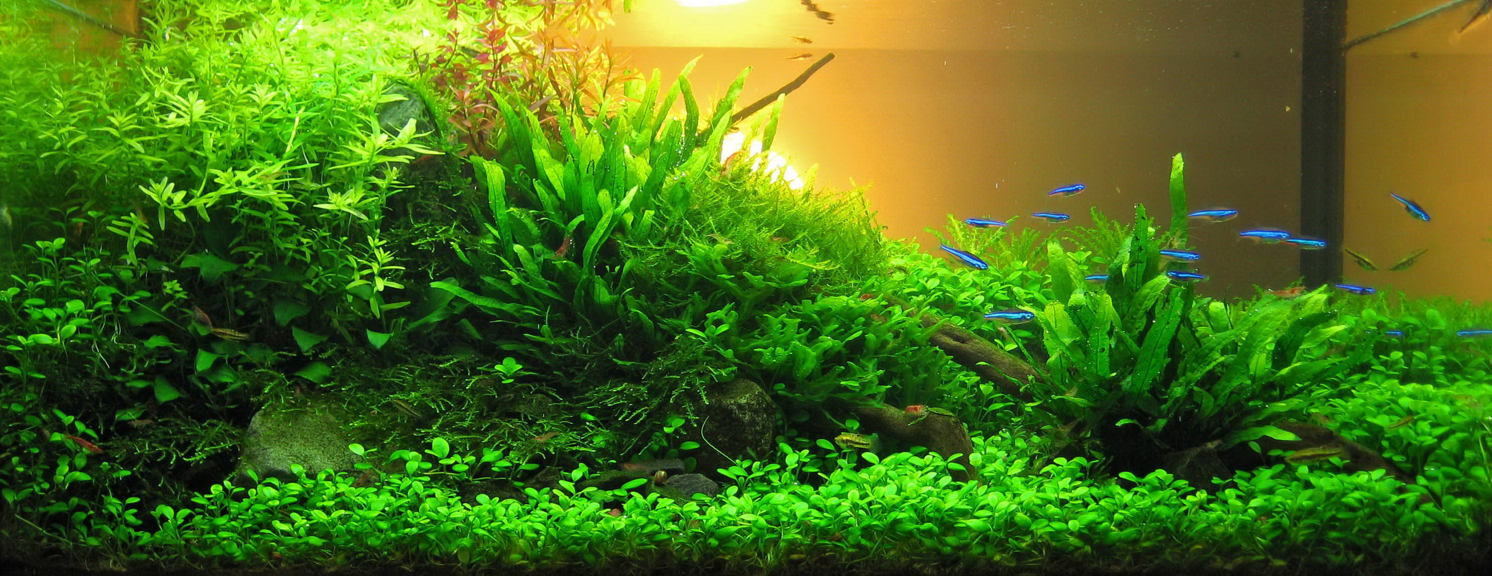 Aquascaping How to create a planted tank