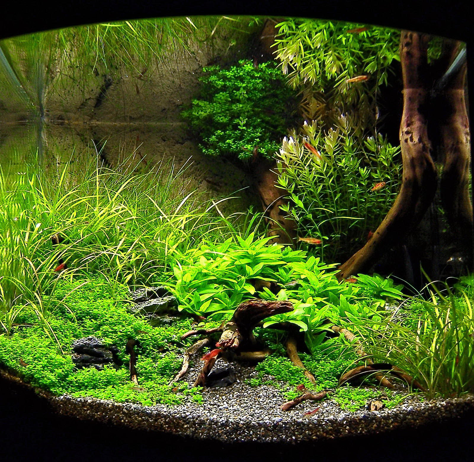 This Highly Attractive Nano Tank Won First Place In The Nano Category Of  U201cAquatic Scapers Europe   International Aquascaping Contestu201d In 2009.