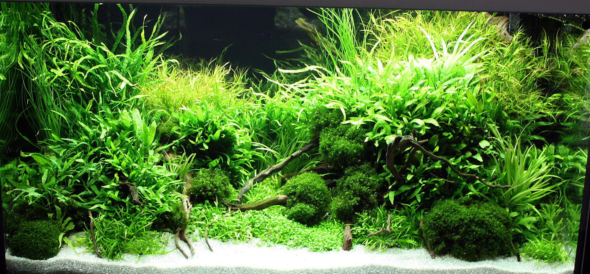 Marcel dykierek and aquascaping aqua rebell for Plante aquarium