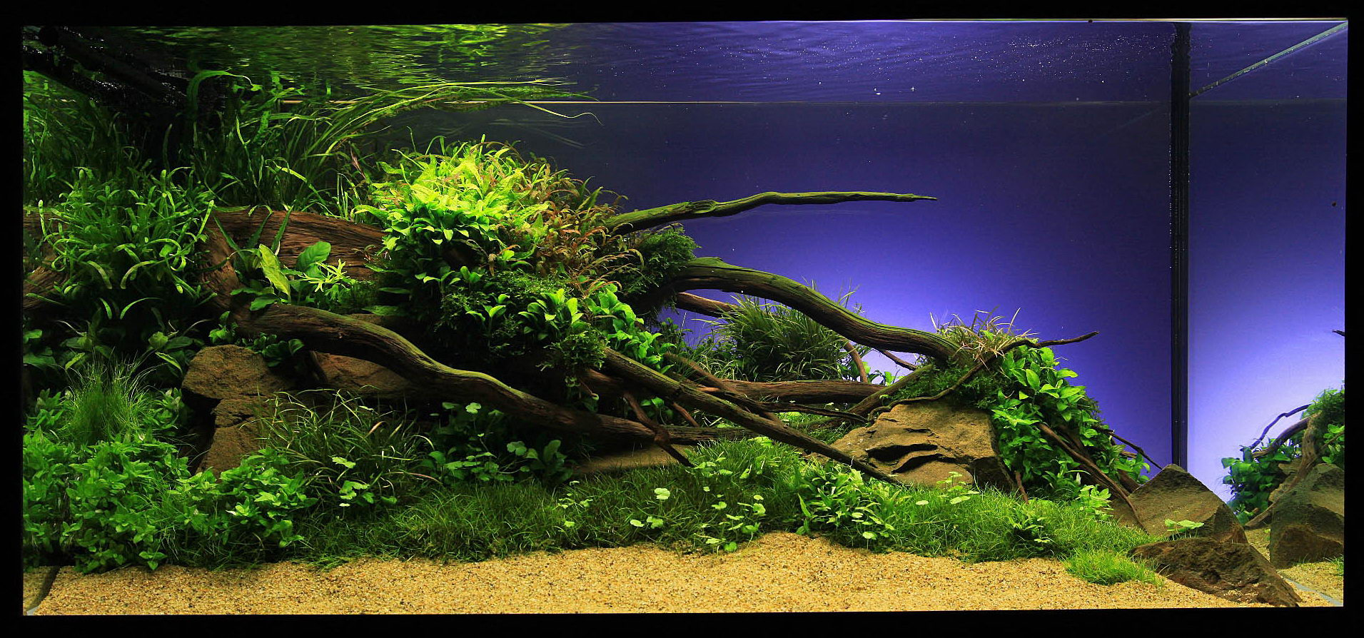 Marcel dykierek and aquascaping aqua rebell for Aquarium design