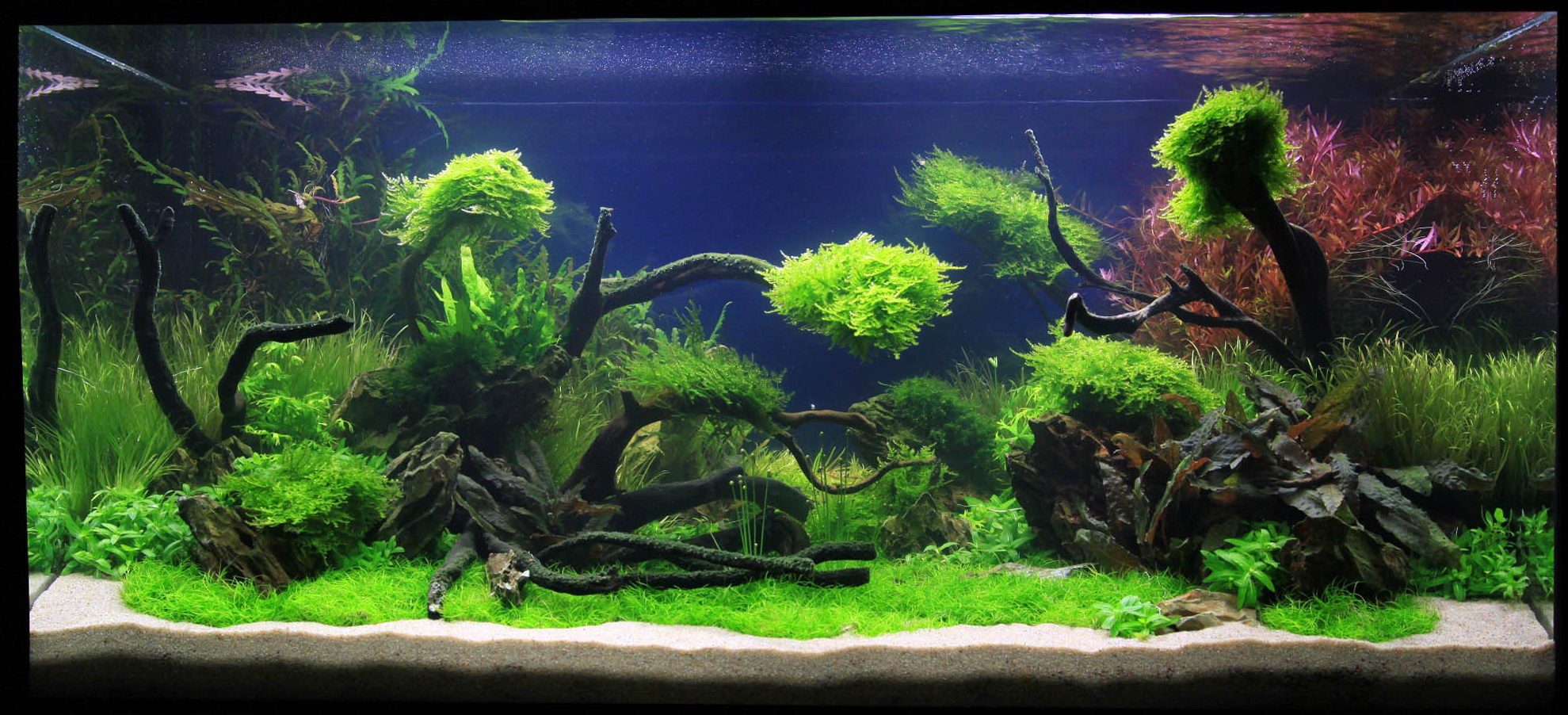 Adrie baumann and aquascaping aqua rebell for Aquarium decoration design