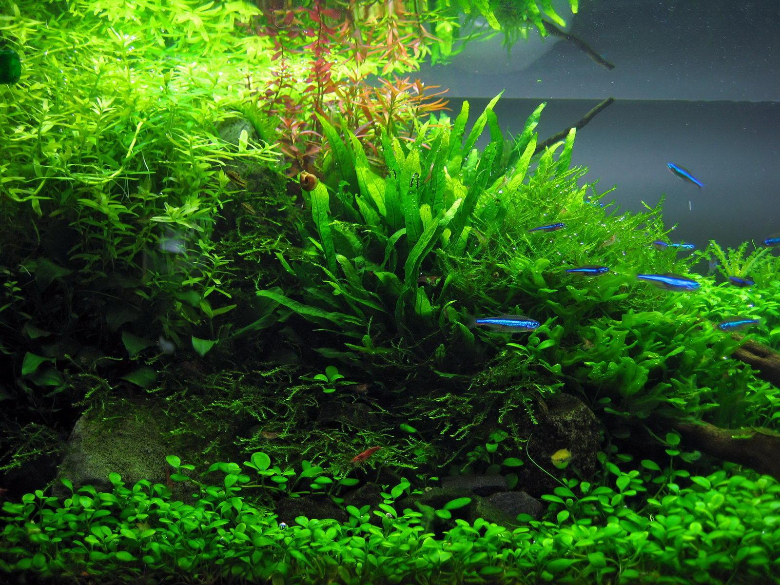 biogene entkalkung pflanzen