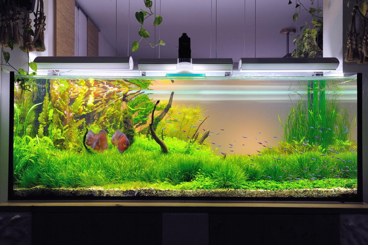 Bruno trimmel and aquascaping aqua rebell for Diskus aquarium