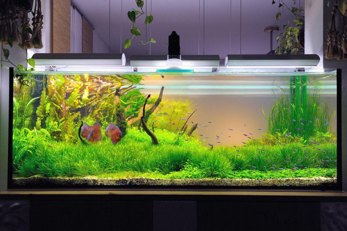 Bruno trimmel und das aquascaping aqua rebell for Aquarium einrichtungsideen