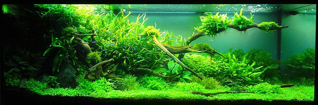Adrie Baumann and Aquascaping - Aqua Rebell