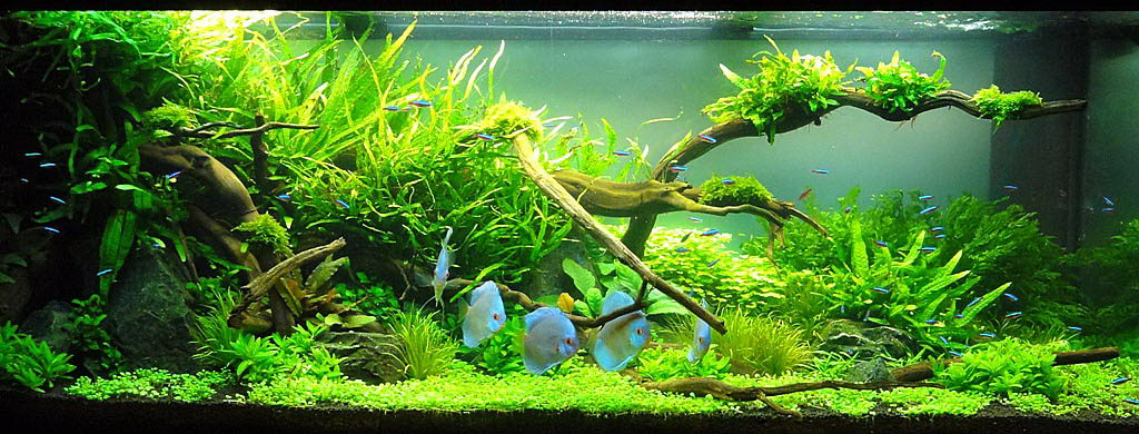 Adrie baumann and aquascaping aqua rebell for Diskus aquarium