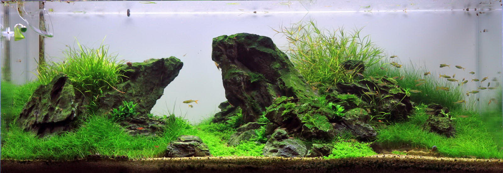 Freir 228 Ume Im Aquascaping Aqua Rebell