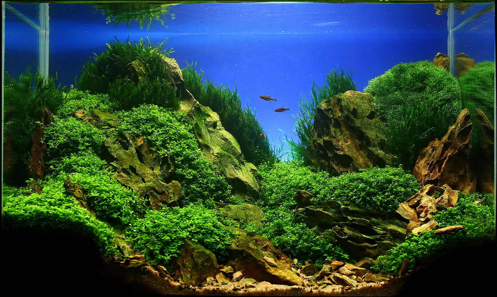 Jan Simon Knispel and Aquascaping - Aqua Rebell