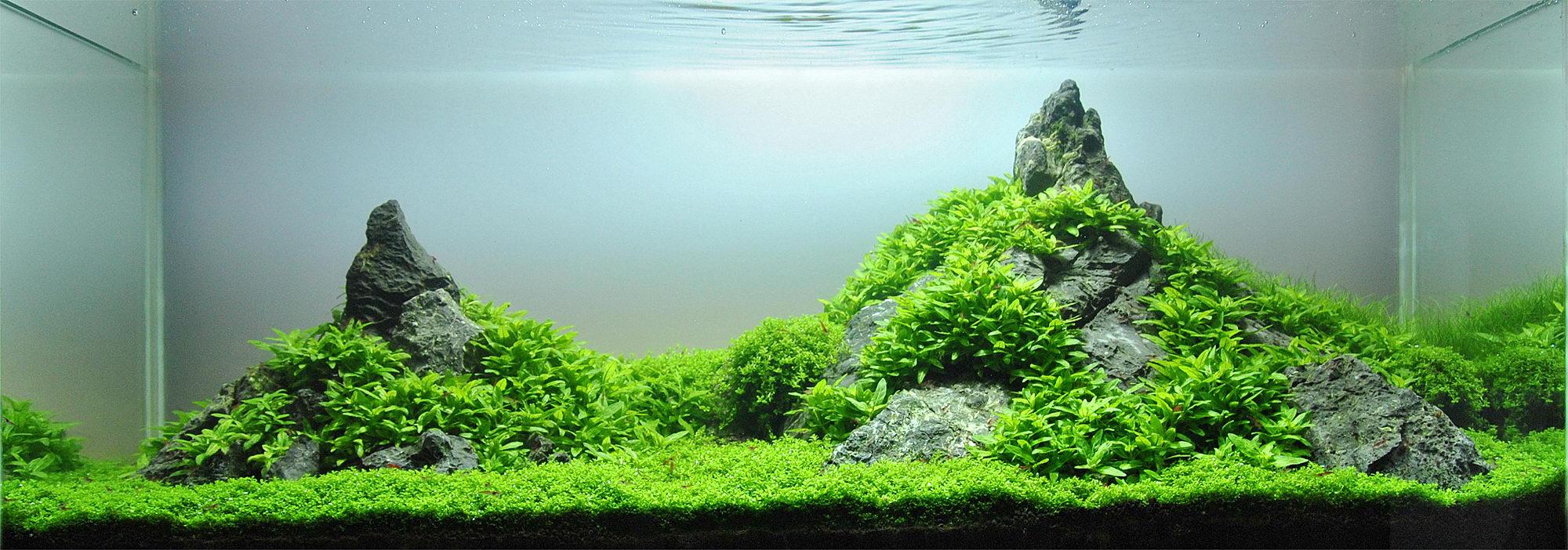 Lennart J?hnk and Aquascaping - Aqua Rebell