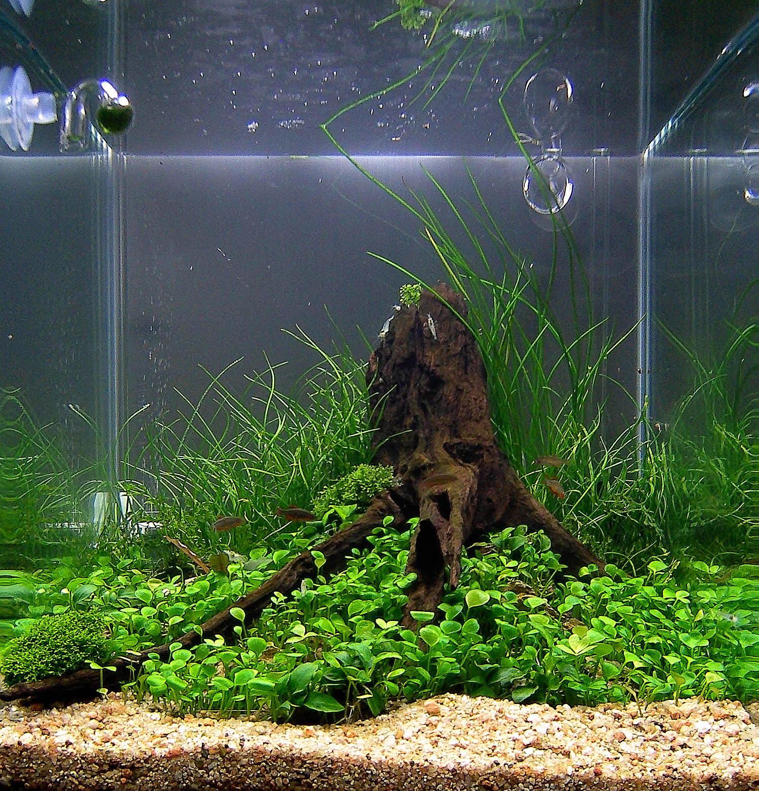 aquascaping-nano-01.jpg