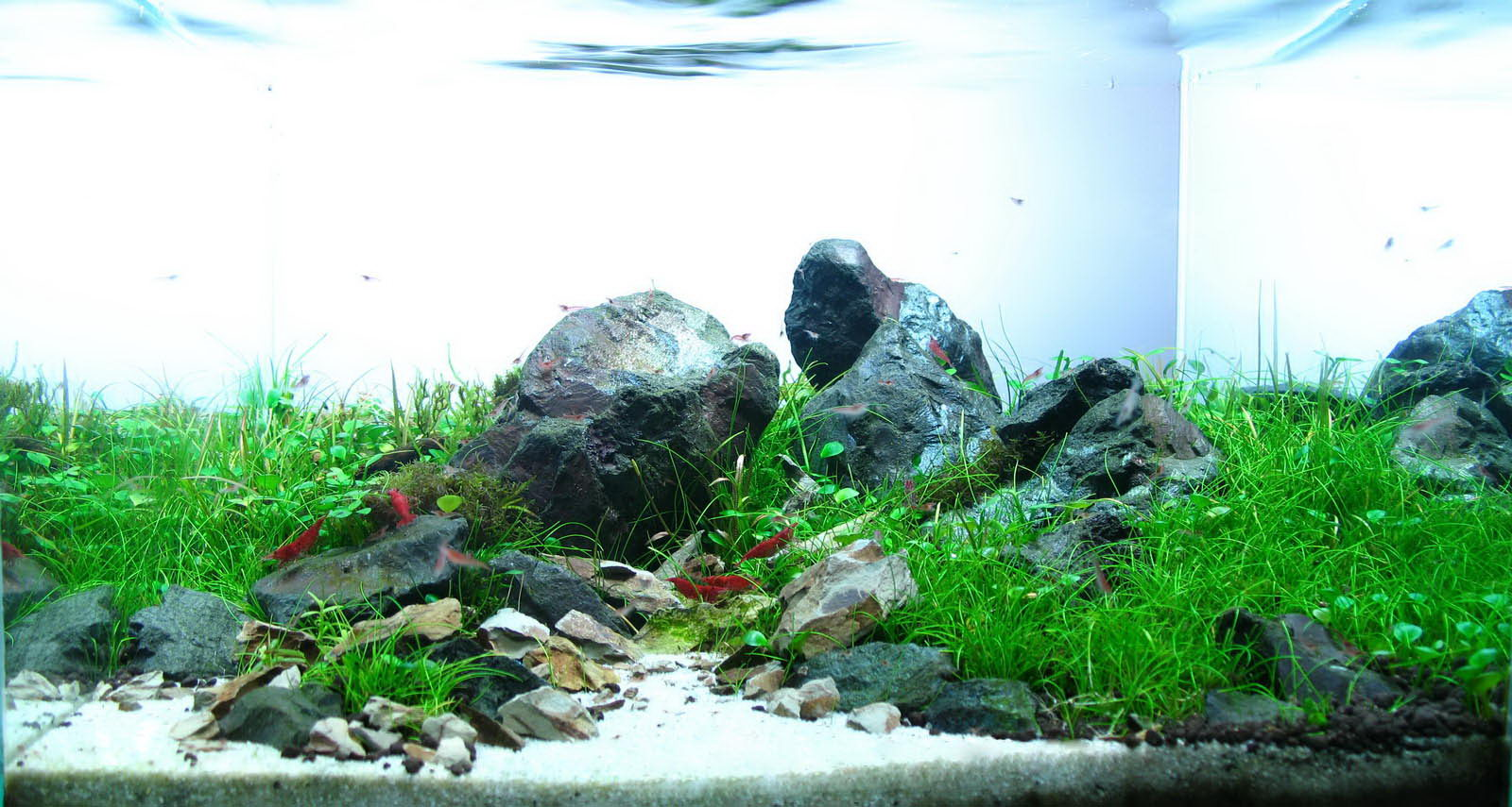 Timo W?nsche and Aquascaping - Aqua Rebell
