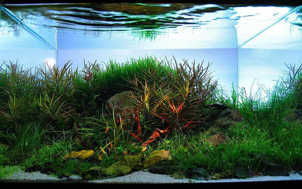 Nano aquascaping - Gambar aquascape ...