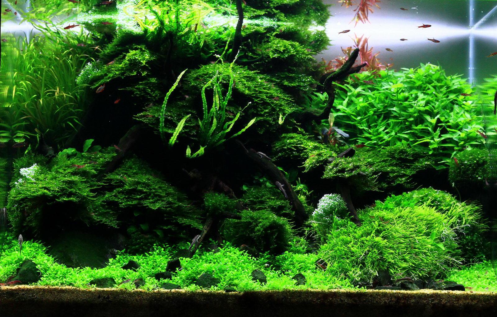 Passende Pflanzenwahl Beim Aquascaping Aqua Rebell