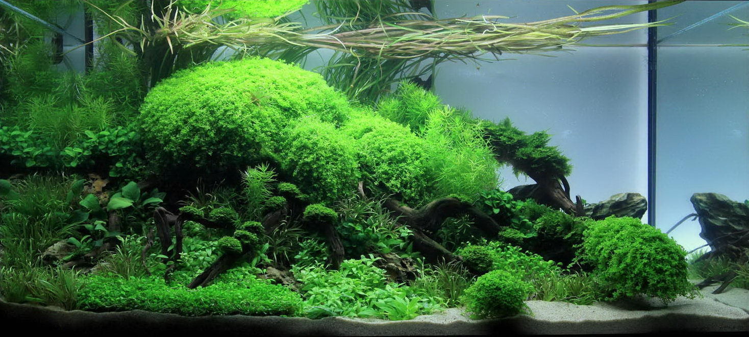Jan simon knispel and aquascaping aqua rebell for Plante aquarium