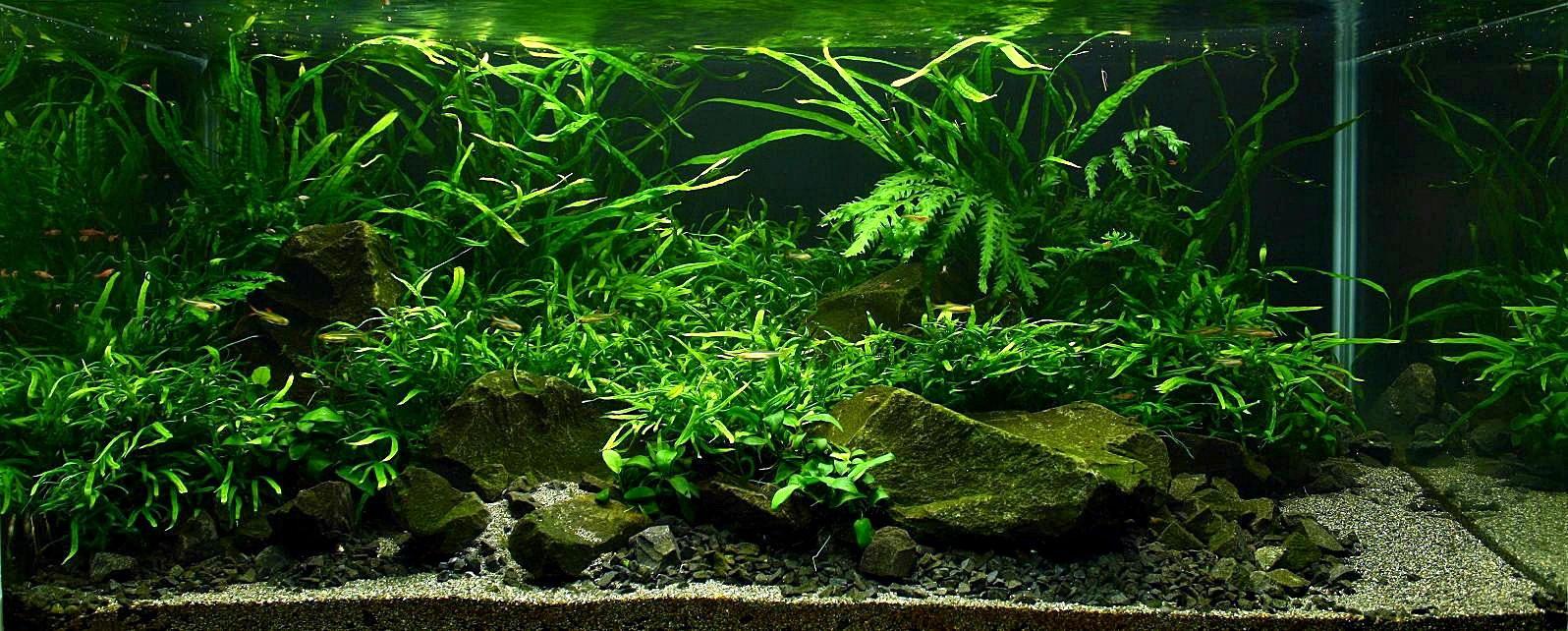 Vladimir fitz and aquascaping aqua rebell for Plante aquarium