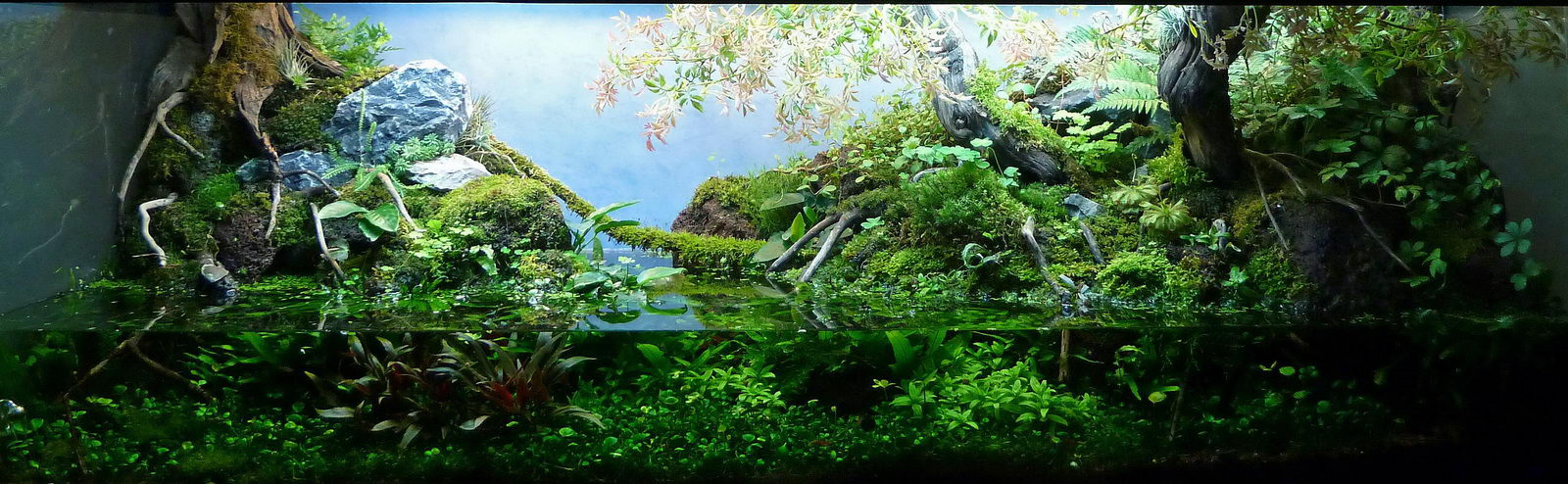 Andreas Ruppert and Aquascaping - Aqua Rebell 10 Gallon Paludarium