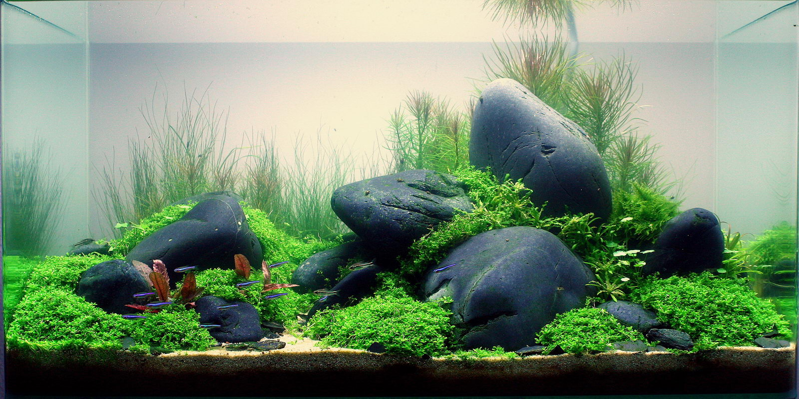 [Obrazek: aquascaping-the-Color-and-the-shape.jpg]