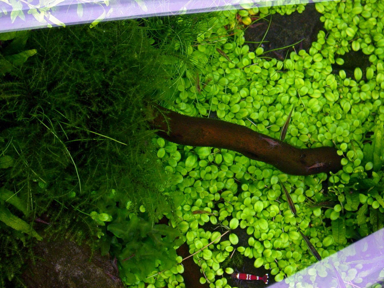 suitable plants aqua rebell