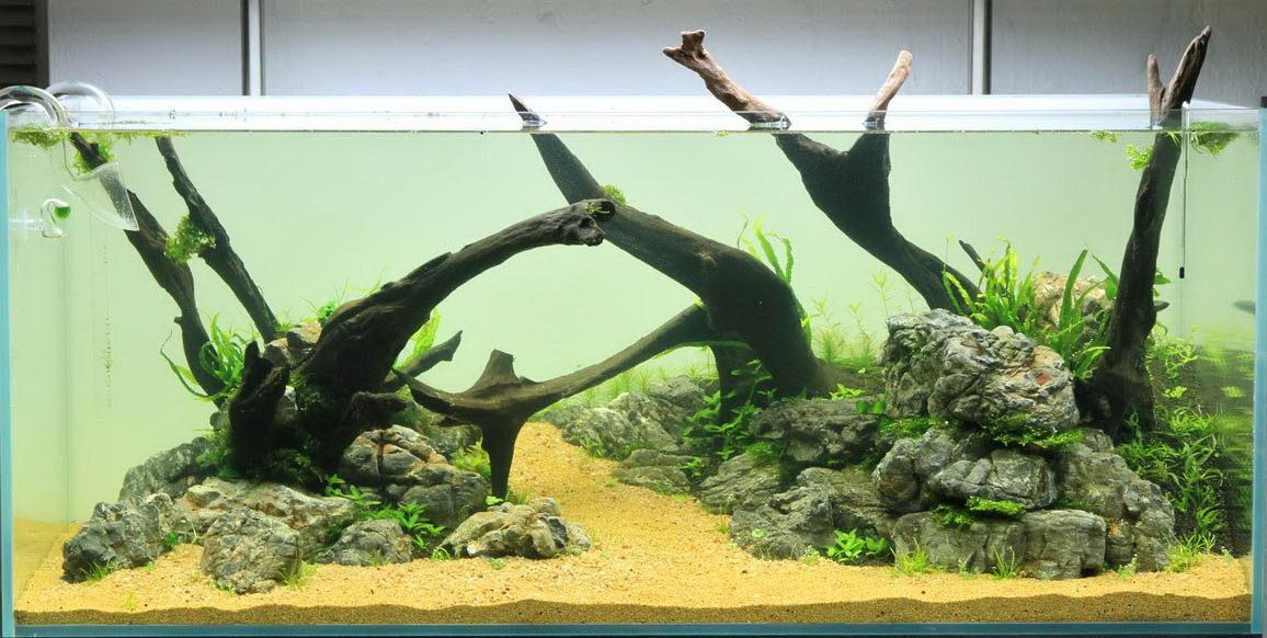 http://www.aqua-rebell.de/images/aquascaping/aquascaping-wurzeln-01 ...
