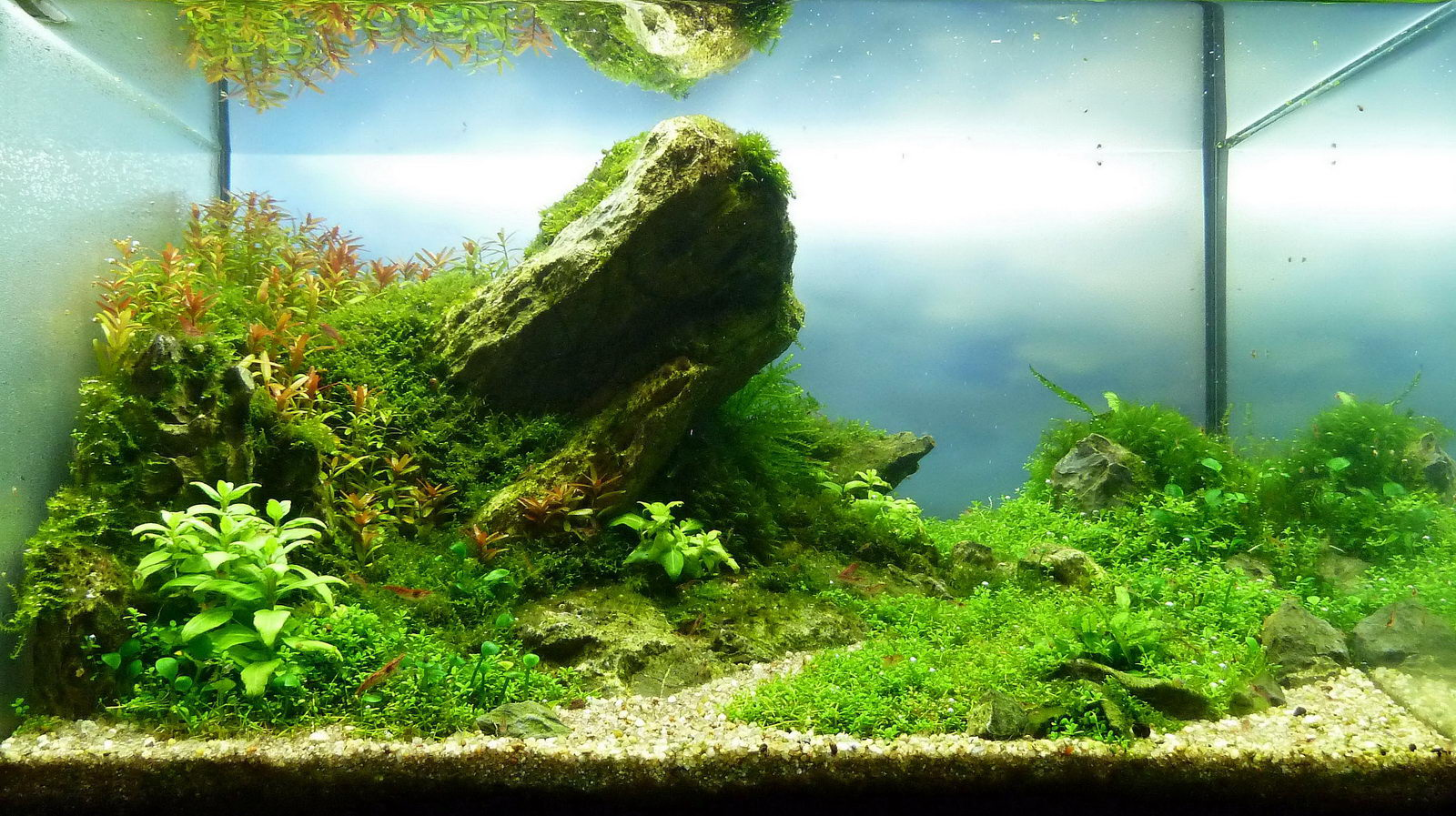Aquascape rock the image kid has it - Gallery aquascape ...